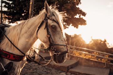 Imagens de cavalos no Alto da Sé, Olinda-PE.