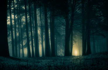 Wall Murals Northern Europe A spooky scenery of a trees. Halloween themed landscape. Foggy morning during the first snow.