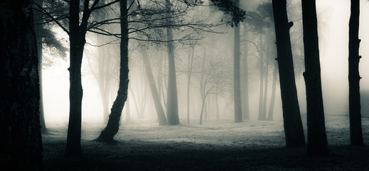 In de dag Noord Europa A spooky scenery of a trees. Halloween themed landscape. Foggy morning during the first snow.