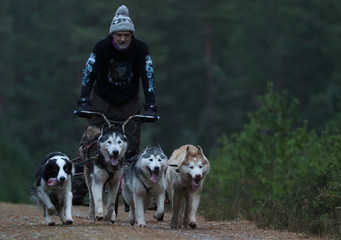A musher takes his dogs on a training run for this weekend's annual Aviemore Sled Dog Rally, Feshiebridge, Scotland