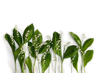 Flower with leaves Lily of the valley ( Convallaria majalis, May bells, may-lily ) on a white background with space for text. Top view, flat lay