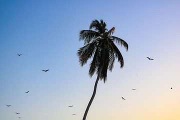 Palm tree at sunset with birds flying around it Wall mural