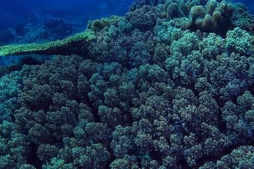 In de dag Koraalriffen coral reef macro / texture, abstract marine ecosystem background on a coral reef