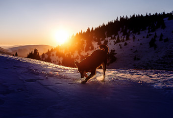 dog playing on the snow on mountains at sunset, computer painting effect.