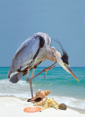 Great Blue Heron Stops to Scratch by the Sea Shells on the Beach