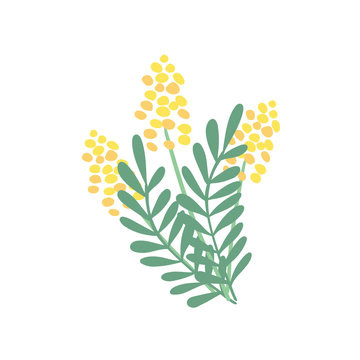 A nice bouquet of  mimosa flowers and leaves.  Great for spring greeting cards, logo. Hand drawn vector illustration isolated on white background.