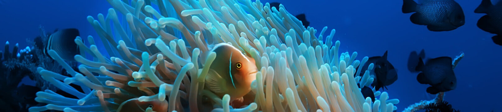 underwater scene / coral reef, world ocean wildlife landscape