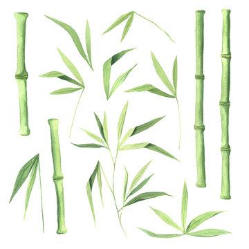 Watercolor green bamboo plant set