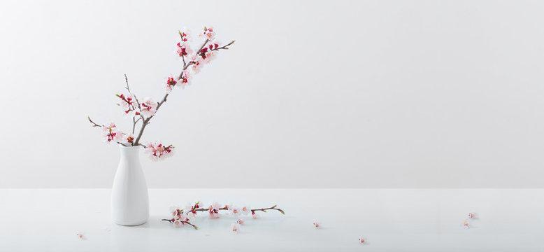 flowering cherry branch in  vase on white background