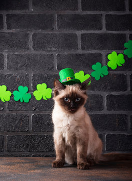 Funny cat in green leprechaun hat
