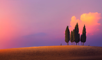 Poster Toscane Beautiful nature countryside landscape; farm field and cypress trees over sunset sky