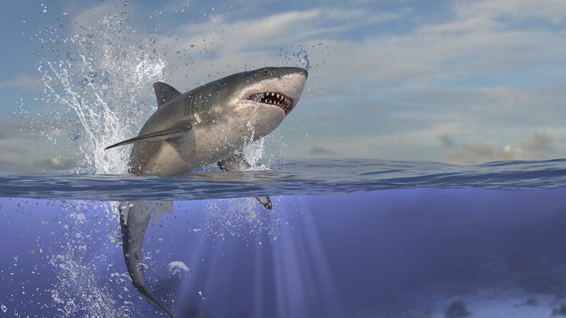 Perfect scene of great white shark jumping out of water and underwater is shown in image 3d rendering