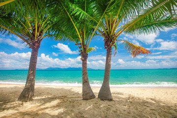 Fototapete - beach and coconut palm trees