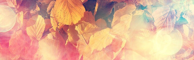long narrow background autumn leaves