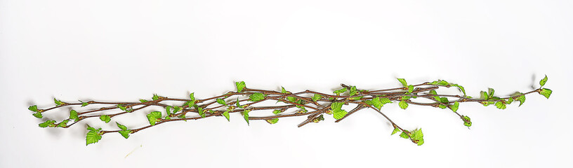 white background branches small leaves spring / isolated on white young branches with buds and leaves, spring frame Fotobehang
