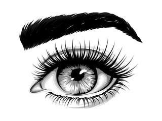 Hand-drawn realistic image of a woman's eye with eyebrows and long eyelashes. Fashion illustration. Vector EPS 10.