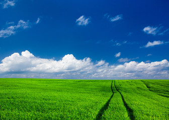Fototapete - field of grass and perfect sky. meadow landscape