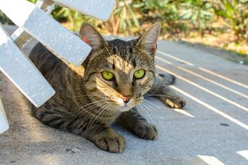 Beautiful green eyed tabby sits under a bench in Split, Croatia