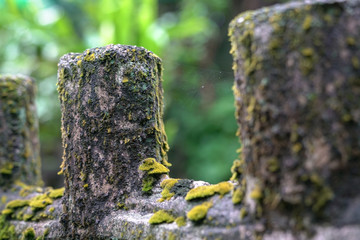 Green moss on wooden fence