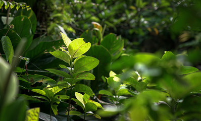 Tropical forest with lush green leaves