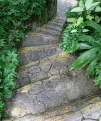 Steps or staircase in the garden. Concept for journey or steps to success.
