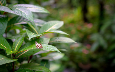 Tropical forest with a butterfly on a green leaf.