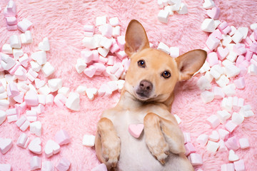 Tuinposter Crazy dog valentines wedding dog in love wit rose
