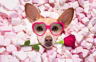 Autocollant pour porte Chien de Crazy valentines wedding dog in love wit rose
