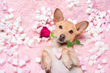 Deurstickers Crazy dog valentines wedding dog in love wit rose