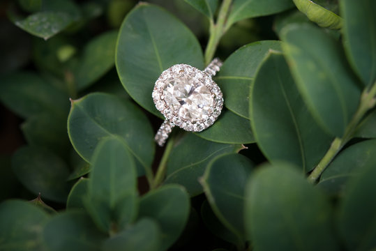 Diamond Engagement Wedding Ring on Green Plant Stem