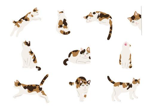 Calico cats