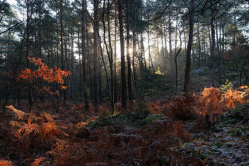 Sunrise in Fontainebleau forest.
