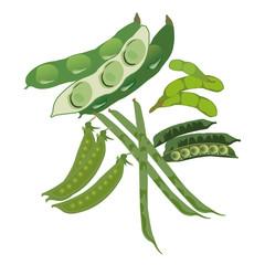 豆科野菜5種