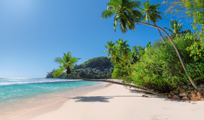 Coconut palms on beautiful tropical beach and turquoise sea in Paradise Caribbean island.