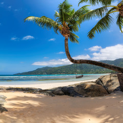 Fototapete - Coco palm trees on Sunny beach and turquoise sea in Seychelles island. Summer vacation and tropical beach concept.
