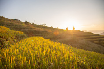Sunset sky landscape view at yellow and green terraced rice field in Pa Pong Piang , Mae Chaem, Chiang Mai, Thailand .