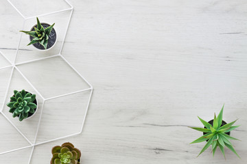 White wooden desk with succulent plants. View from above. Geometric pattern. Copy space....