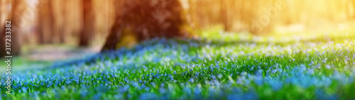 Wall mural Panoramic view to spring flowers in the park