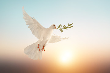 Foto En Lienzo - white dove or white pigeon carrying olive leaf branch on pastel background and clipping path and international day of peace