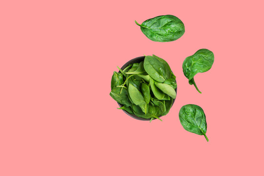Fresh raw spinach leaves in dark bowl isolated on cherry pink background. Healthy plant based diet detox smoothies ingredient. Minimalist creative food poster
