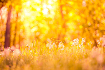 Foto op Plexiglas Oranje Sunset meadow flowers in a forest field. Peaceful scenery, warm colors, bright rays over high grass. Forest ground nature landscape background