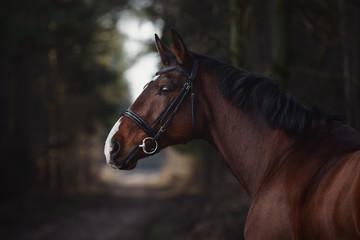Fotorolgordijn Paarden close up portrait of stunning trakehner gelding sport horse boy with white line on road in forest