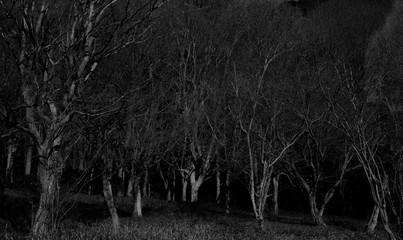 暗い森 Fototapete