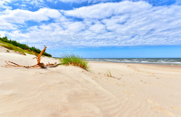 Photo sur Toile Beige Beautiful summer landscape of sea coast and dunes