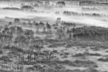 Foto op Canvas Donkergrijs The foggy forest, black and white landscape