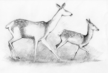 Roe Deer Family