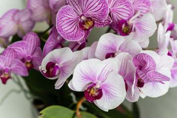 Beautiful purple orchid flowers isolated