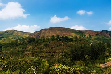 Scenic tea plantations in Sri Lanka highlands