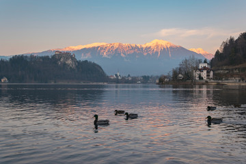 Wall Murals Northern Europe Sunset over the lake Bled in Slovenia in winter, with alps with snow in the distance