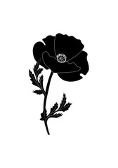 Monochrome, black-and-white image of poppy flower isolated against a white background, vector illustration, hand drawn.